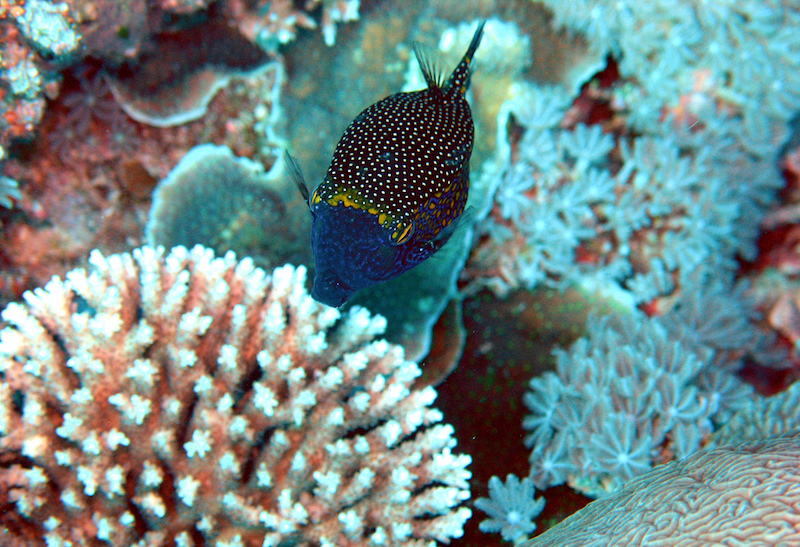 best diving in the world layang layang