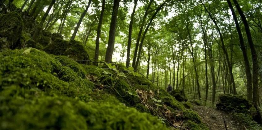 romantic, krakow, Las Wolski, Wolski Forest