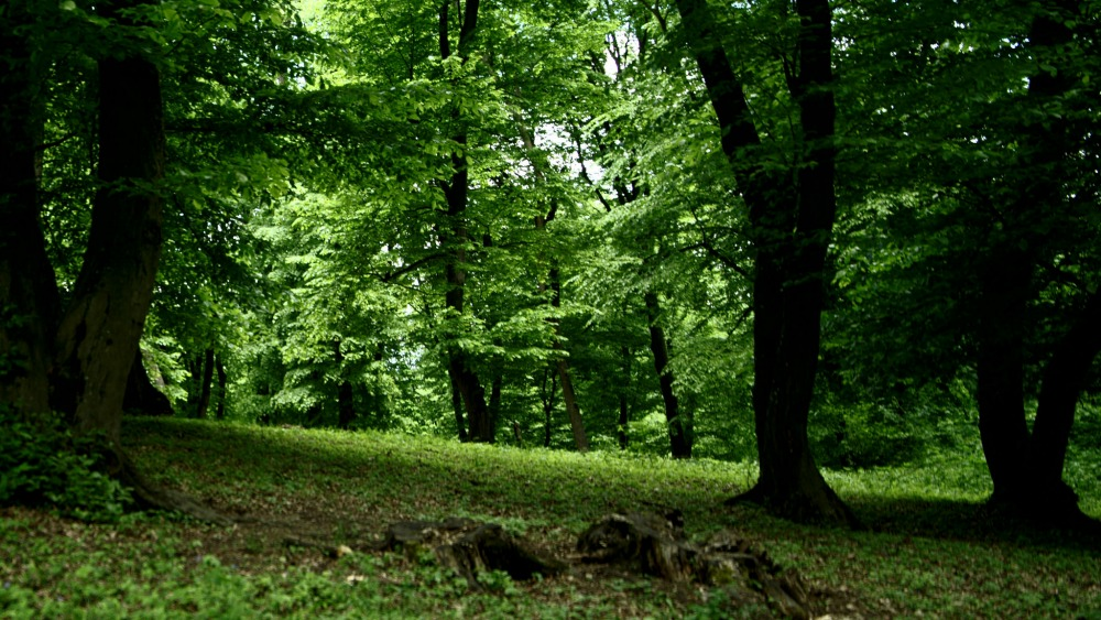 most haunted places in Europe, romania, Hoia Baciu Forest