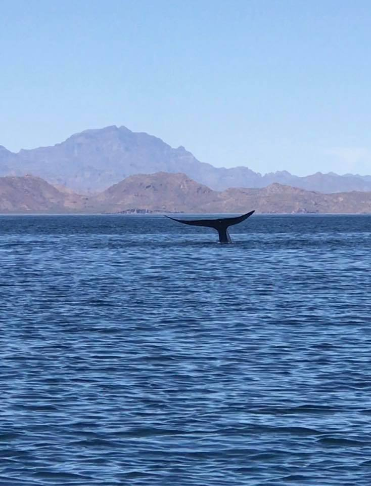 things to do in loreto
