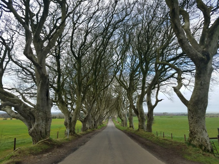 Game of thrones filming locations in northern ireland, dark hedges, kingsroad
