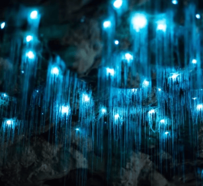Underground Caves, Glowworm Caves