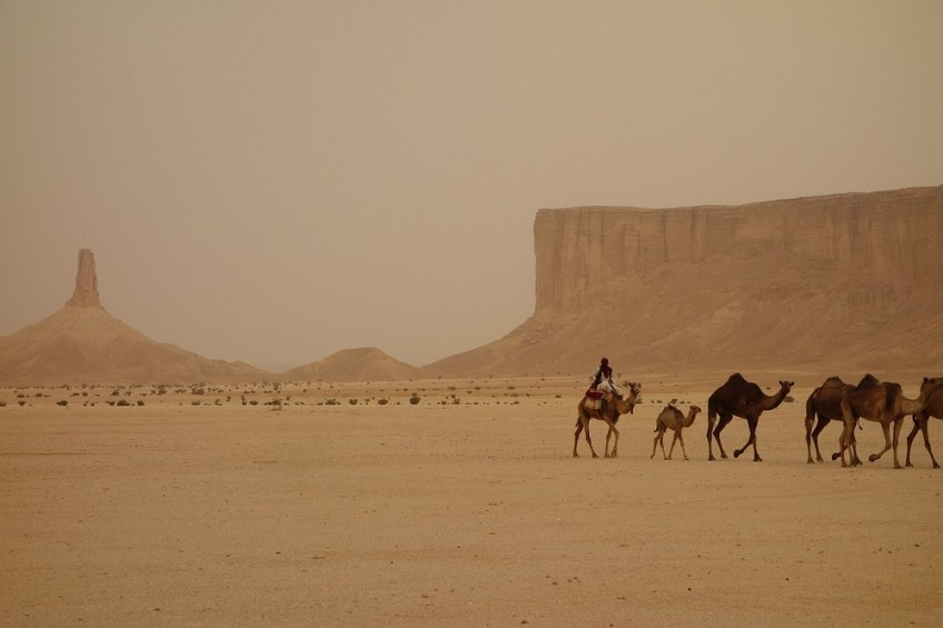 camel in desert, How to Travel to Saudi Arabia