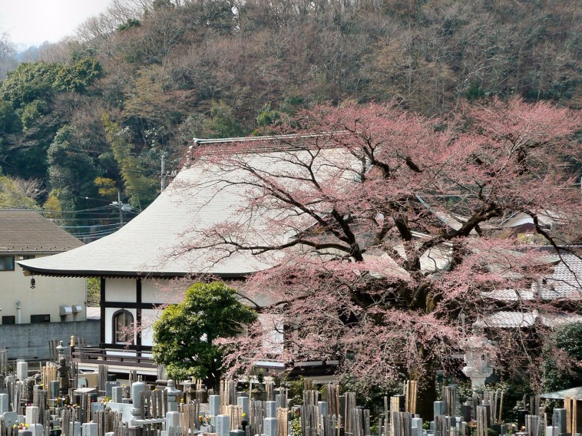 Mt Takao village