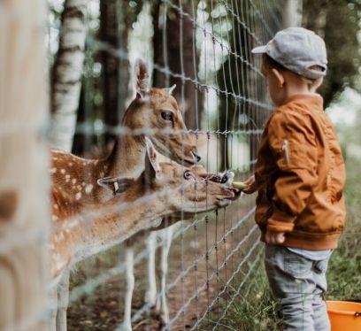 Kid zoo, educational benefits of kids at zoos