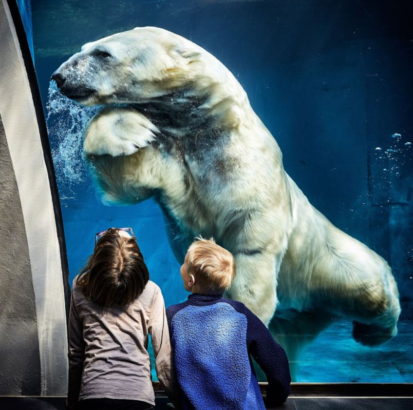 children and polar bear