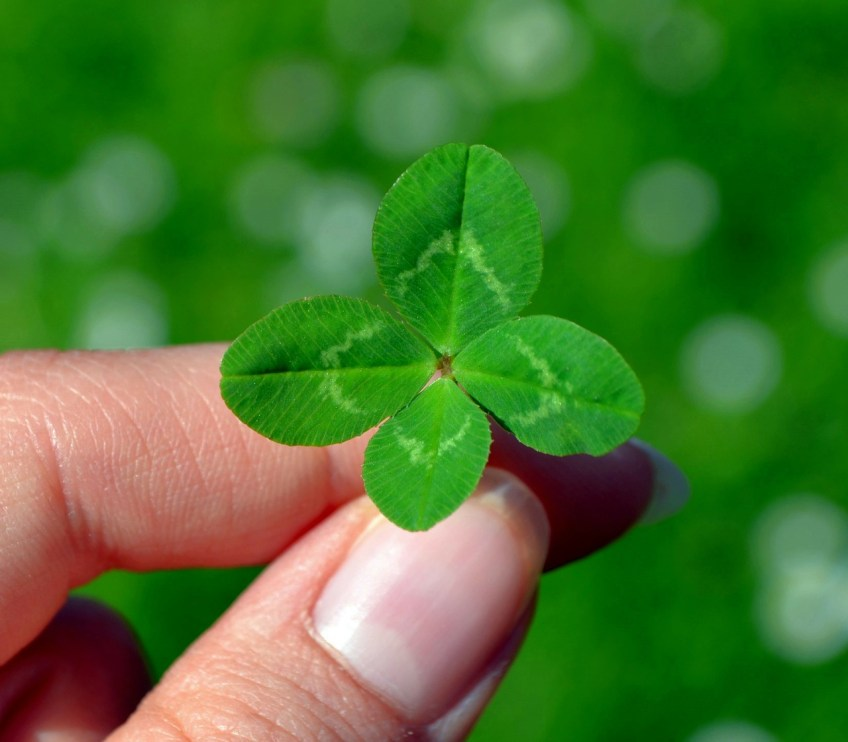 luck four leaf clover