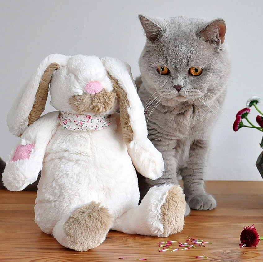 easter gifts for pets, cat toy