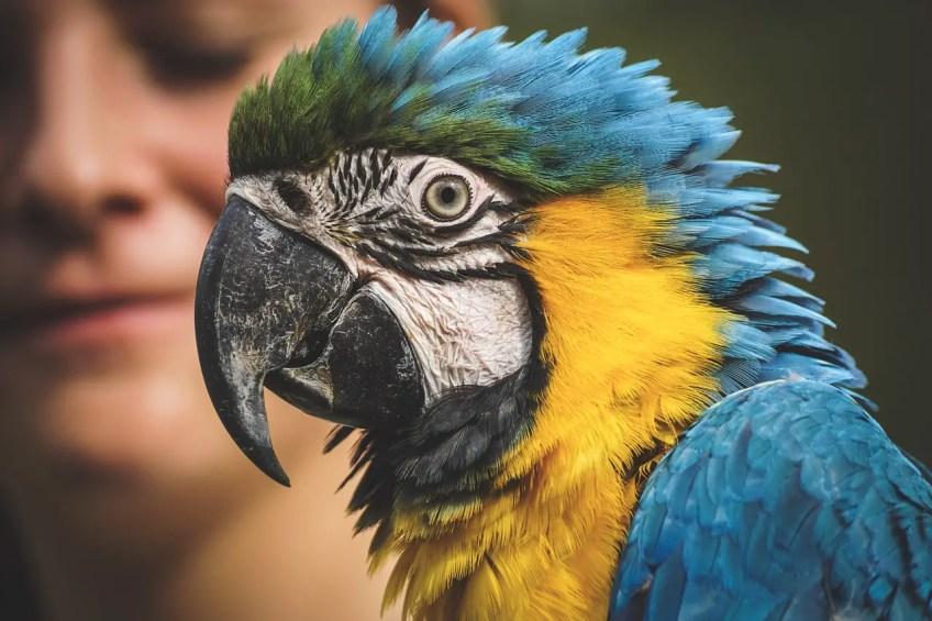 pet care, exotic animals, parrot