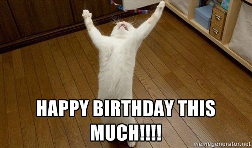 Cat Birthday Memes Cat Memes Fun To Share Each Other