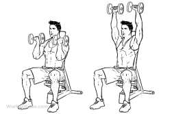 Seated_Arnold_Dumbbell_Press1.png