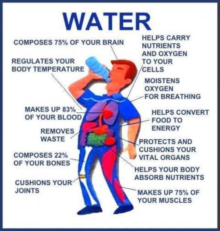 pentingnya-air