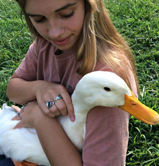 duck coop 5