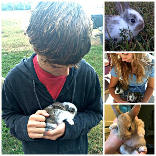 wabbit Collage