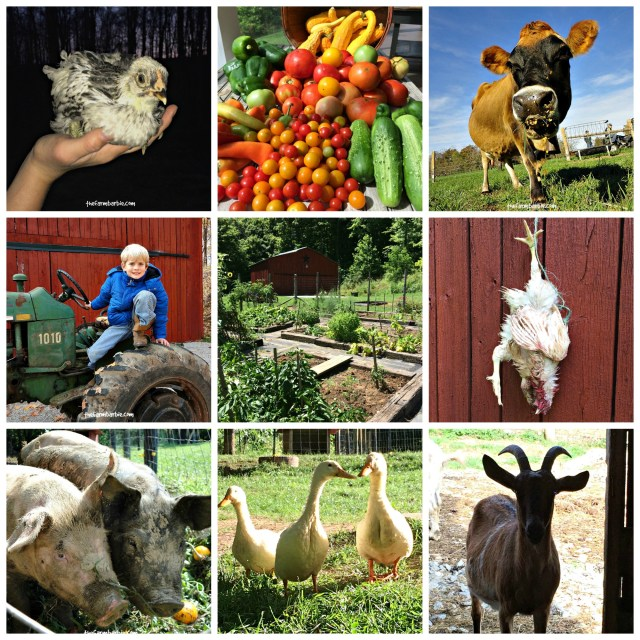 homesteading Collage