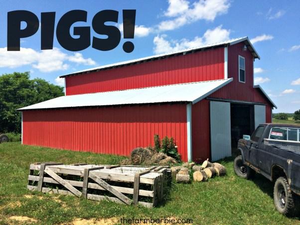 pigs! 1