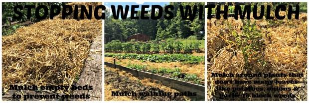 weed free 1.26