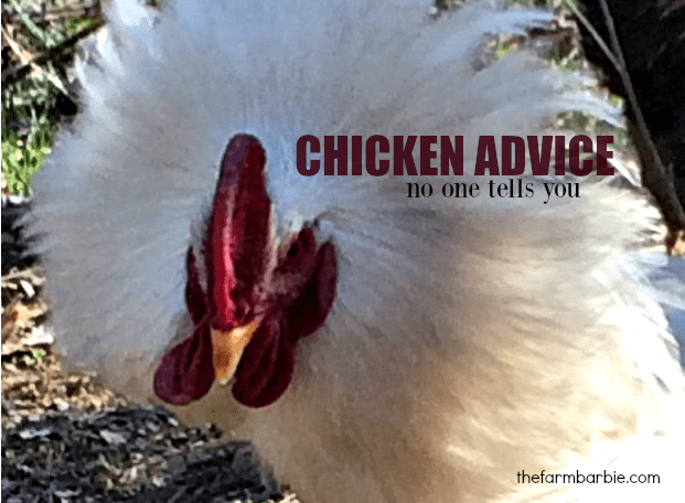 Chicken Advice No One Tells You