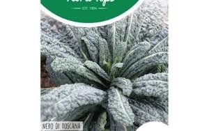 black leaf kale
