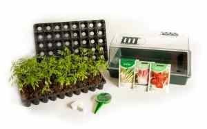 Starter Vegetable Growing Kit