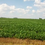 Double crop soybeans via thefarmerslife.com