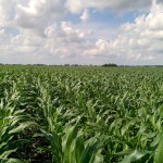 No-Till Corn via thefarmerslife.com