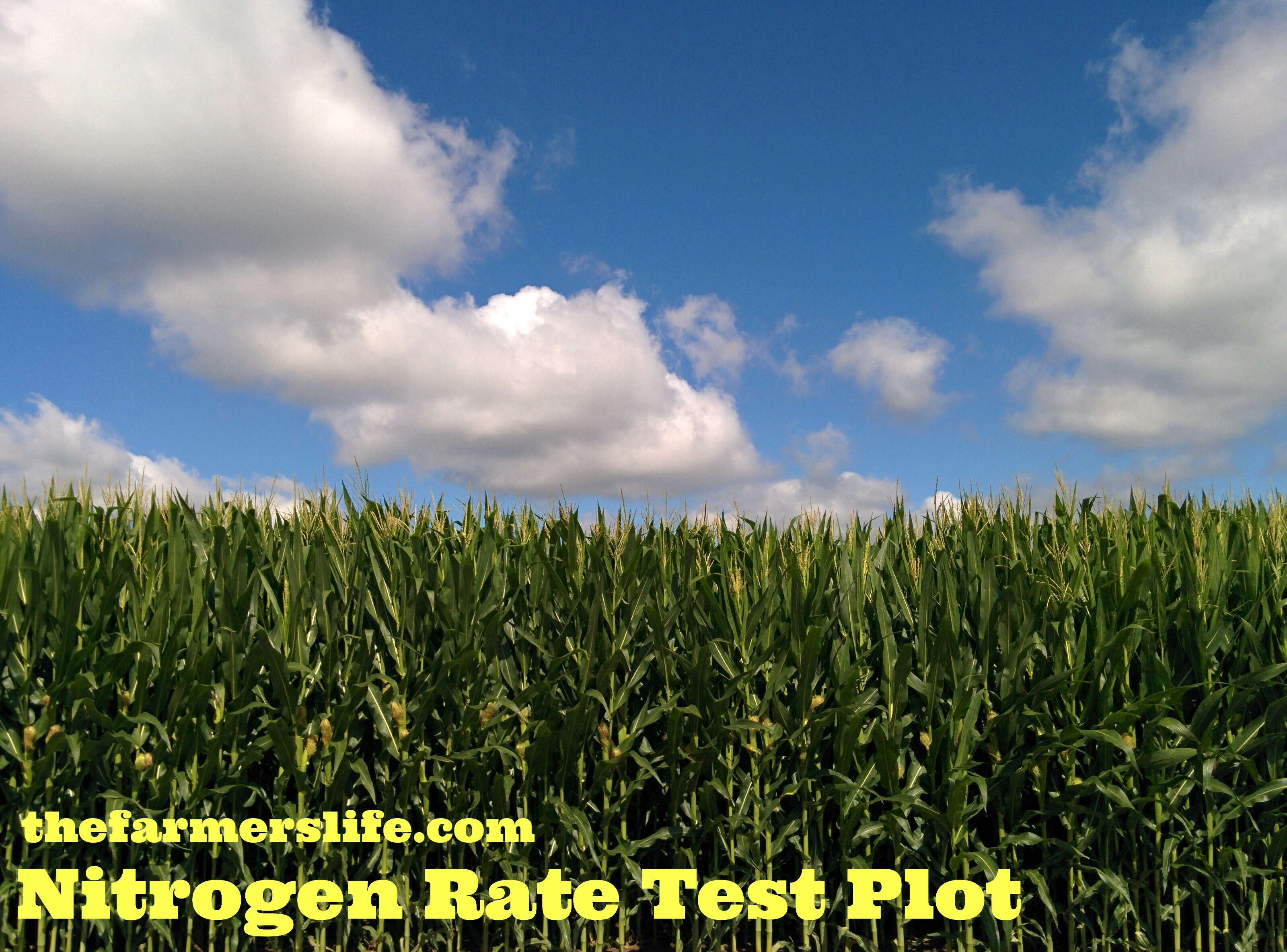 Corn sidedress nitrogen rate test the farmers life corn nitrogen test plot via thefarmerslife nvjuhfo Images