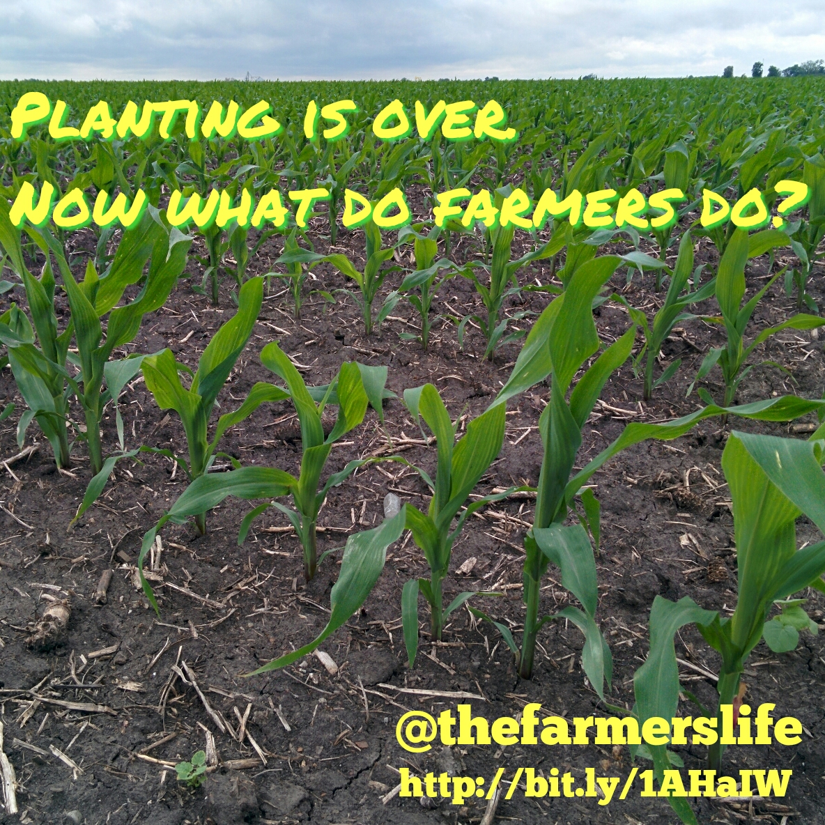 Planting is over  Now what do farmers do? - The Farmer's Life