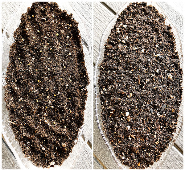 How to Start Growing Tomato Seeds Indoors - The Farm Girl Blog