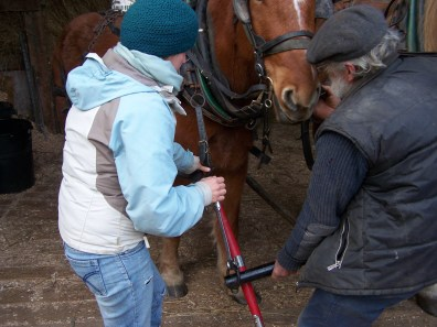 2016_11_10-11-draft-horse-workshop-13