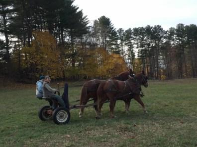 2016_11_10-11-draft-horse-workshop-38