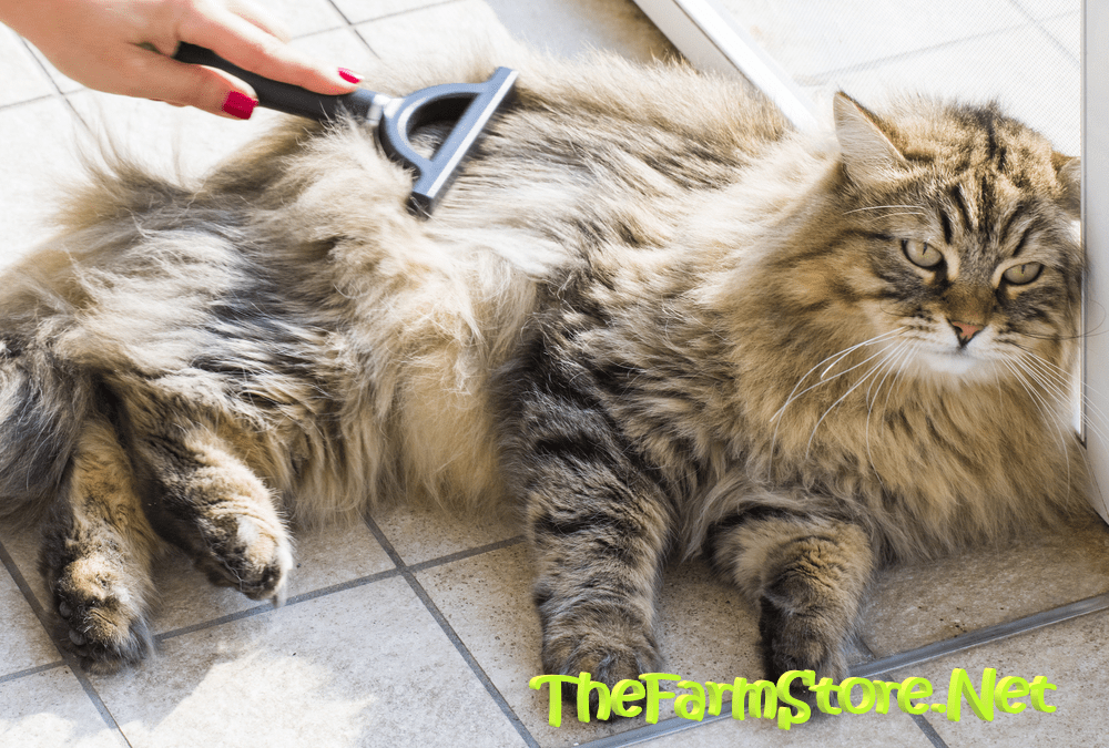 The Best Long Hair Cat Brush Reviews