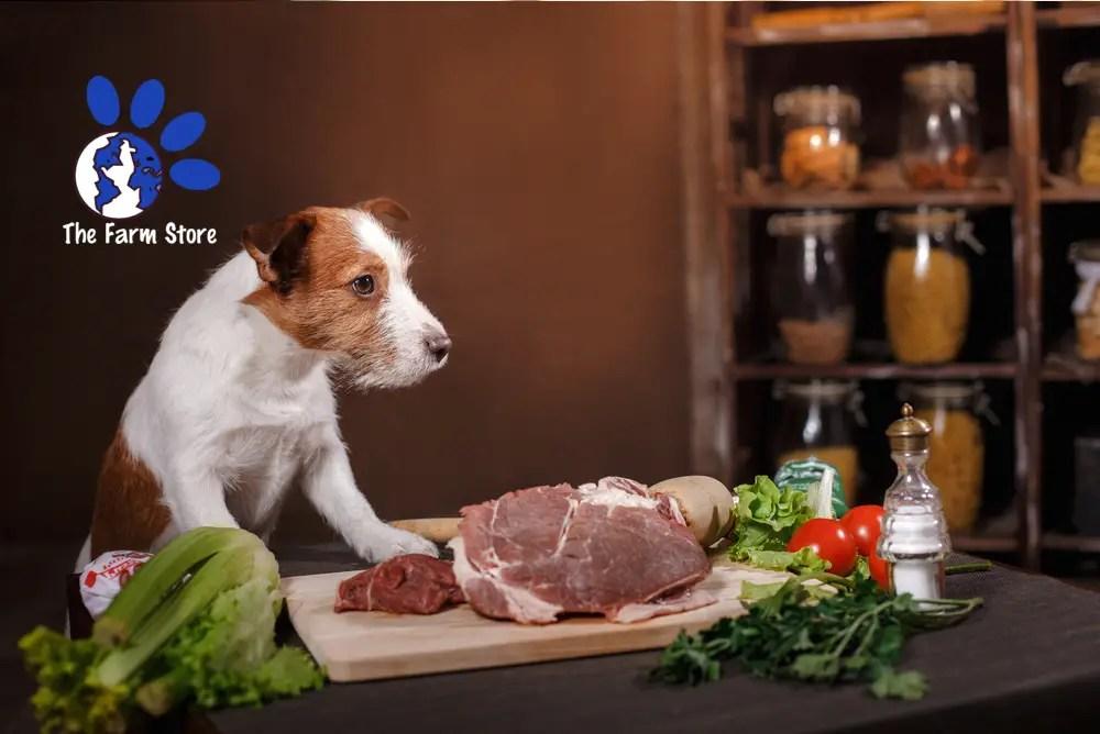 Best Low Calorie Dog Food