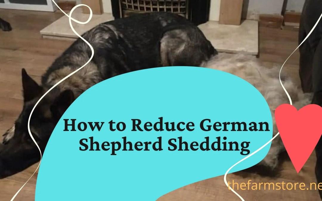 How to Reduce German Shepherd Shedding
