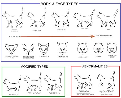 cat body shape guide