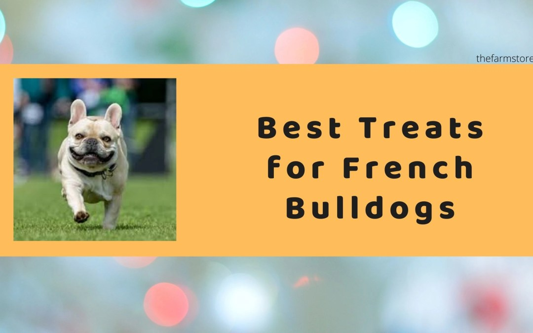 Best Treats For French Bulldogs Reviews 2021