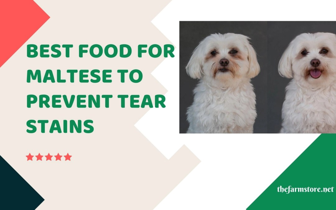 Best Food for Maltese to Prevent Tear Stains