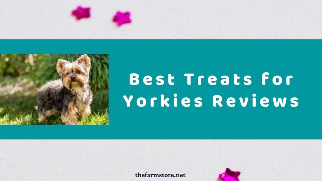 Best Treats for Yorkies in 2021