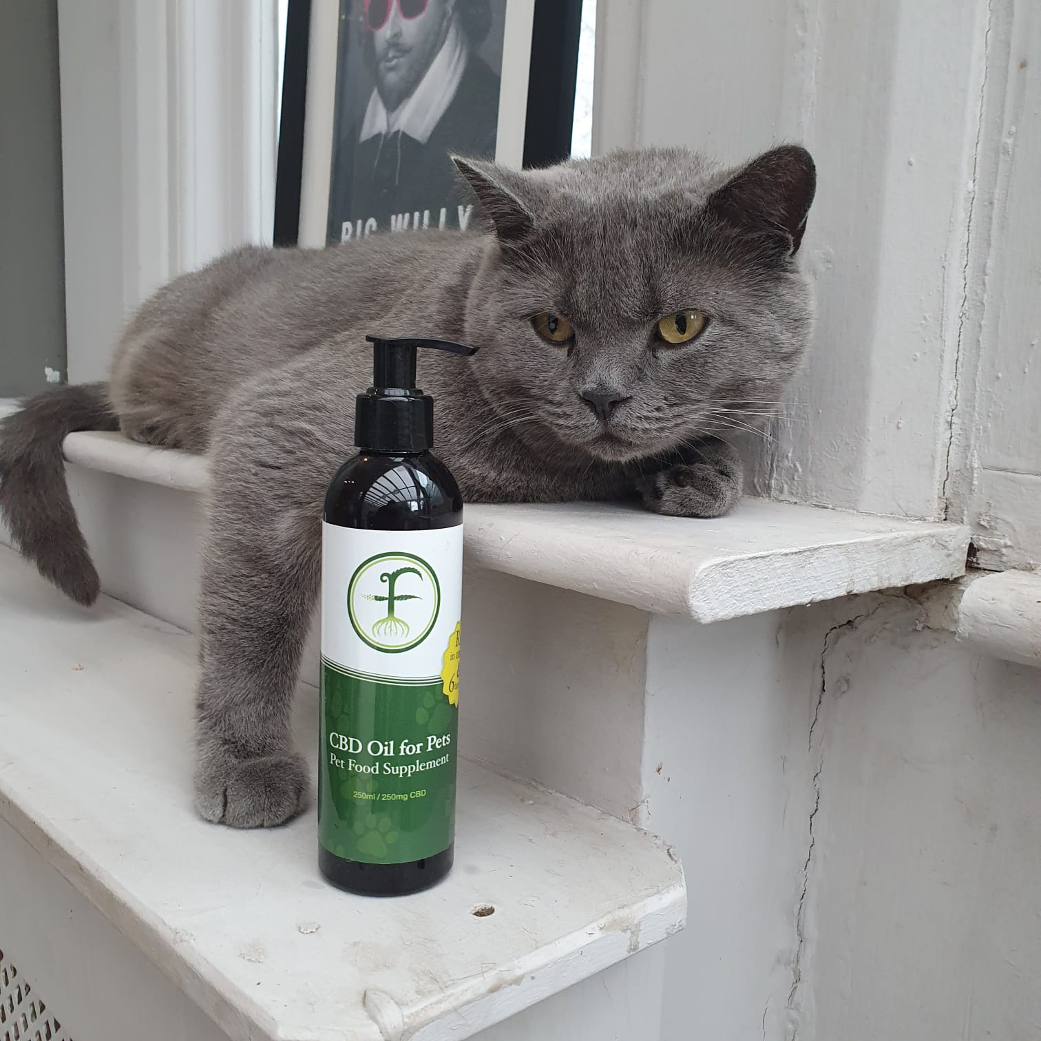 Cat pic pet oil-1