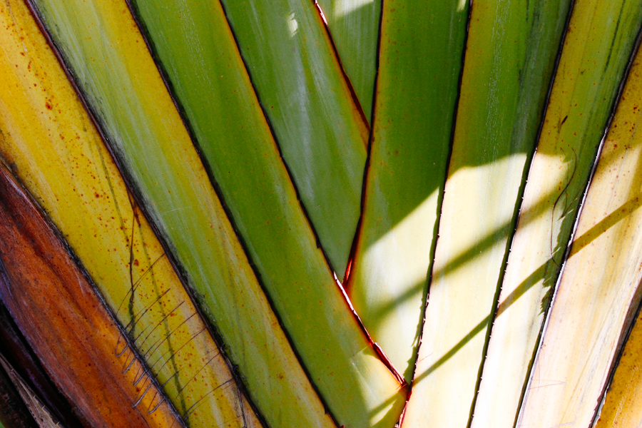 Palm tree textures in Thailand.