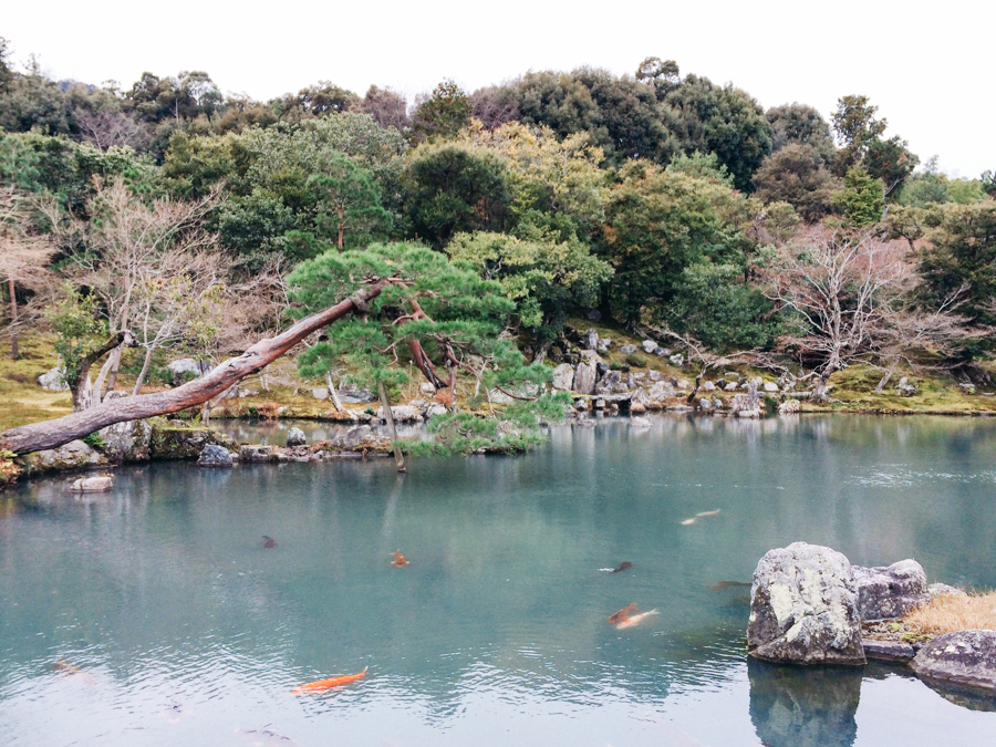 A lake with koi fish at Tenru-ji Temple in Arashiyama. Kyoto photo diary.