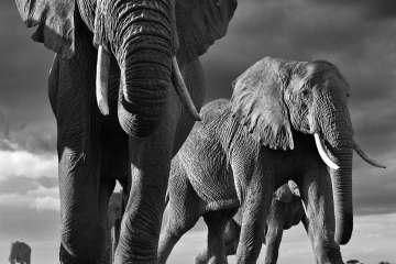Big, Amboseli, Kenya