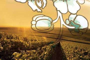 Perrier Jouët Harvest Vineyards