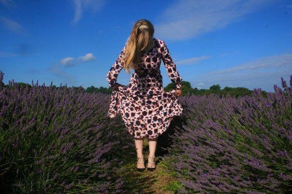 Late Summer Lavender Day