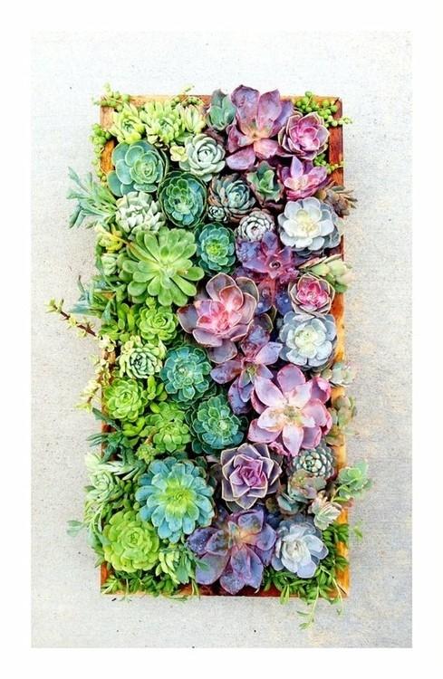 Succulents trendy plants