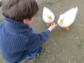 A child feeding ducks
