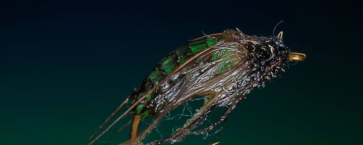 UV Caddis Pupa tied by Barry Ord Clarke