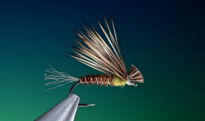 fly tying Pheasant tail X-Caddis