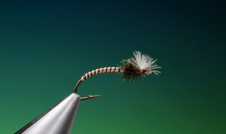 Moose quill midge larvae tied by Barry Ord Clarke