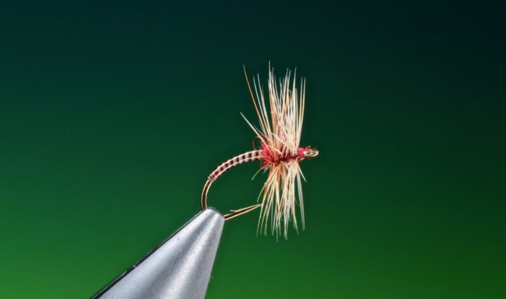 fly tying pay day midge